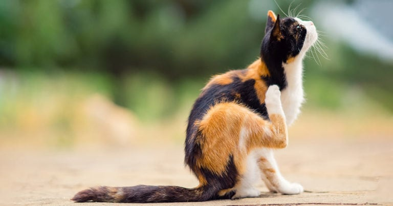 Katzen Zeckenmittel Test