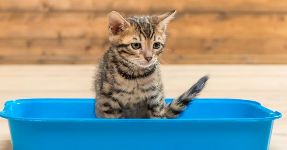 Verstopfung Katze Symptome